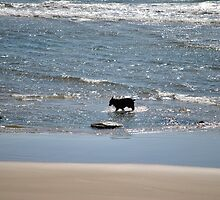 Dog on Beach Newport, Oregon by Tamara Lindsey
