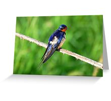 Swallow Greeting Card