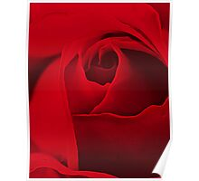 Red is the Rose Poster