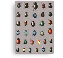 Beetle specimen Canvas Print