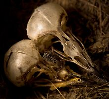 Baby Bird Skulls by Mark Ramstead
