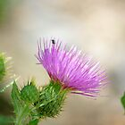 Thistle by Vicki Pelham