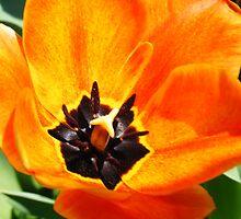 flowers of love. by Krystal Boelte