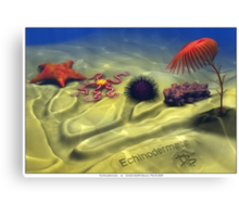 Echinodermata Canvas Print