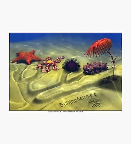 Echinodermata Photographic Print