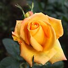 Luscious Yellow by Chappy