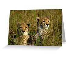 cheetah cubs Greeting Card