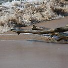 Driftwood On The Shore by reflector