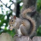 Havin' a Lil' Lunch.... by MichelleR