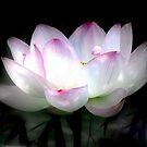 Heavenly Flower by Brian Bo Mei
