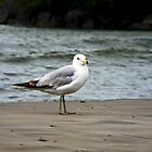 Seagull by Hassan Khan