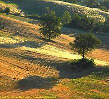 Alba 16 giugno 2010 - Montecorone - (zocca modena italy)_2574  - Fl by primo masotti
