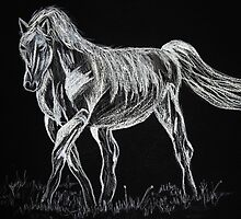 Drawing a Horse with a White Colored Pastel Pencils - Sketch Drawing on black paper   by StilleSkygger