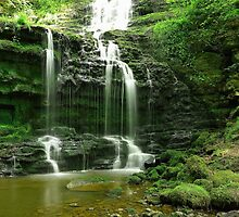 YORKSHIRE SHOWER by andysax
