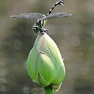 Green Lotus Yellow Dragon by kibishipaul
