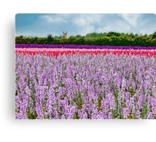 The Confetti Fields of England.  Canvas Print