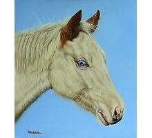 Paint Horse Filly Photographic Print