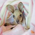 Baby female joey in baby blanket by eagleyeimages