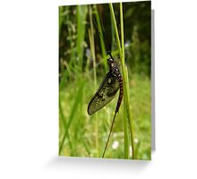 The Aliens Have Landed! Greeting Card
