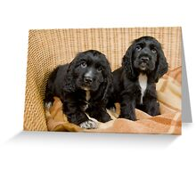 Beautiful Black Cocker Spaniel Puppies Greeting Card