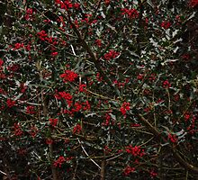 Holly berries by Joanne Babb