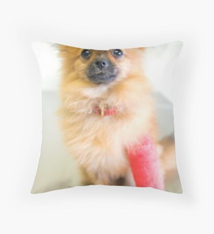 Pomeranium pup in plaster at the vets Throw Pillow