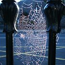 View from a Web by Connie  Danaher