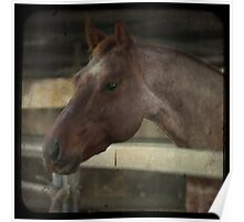 Engaged Horse Poster