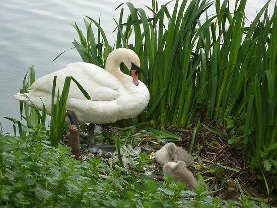 Motherhood at Kew Gardens London UK by Susan Moss