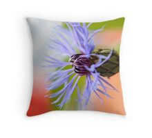 blossom of a cornflower auf Redbubble von pASob-dESIGN