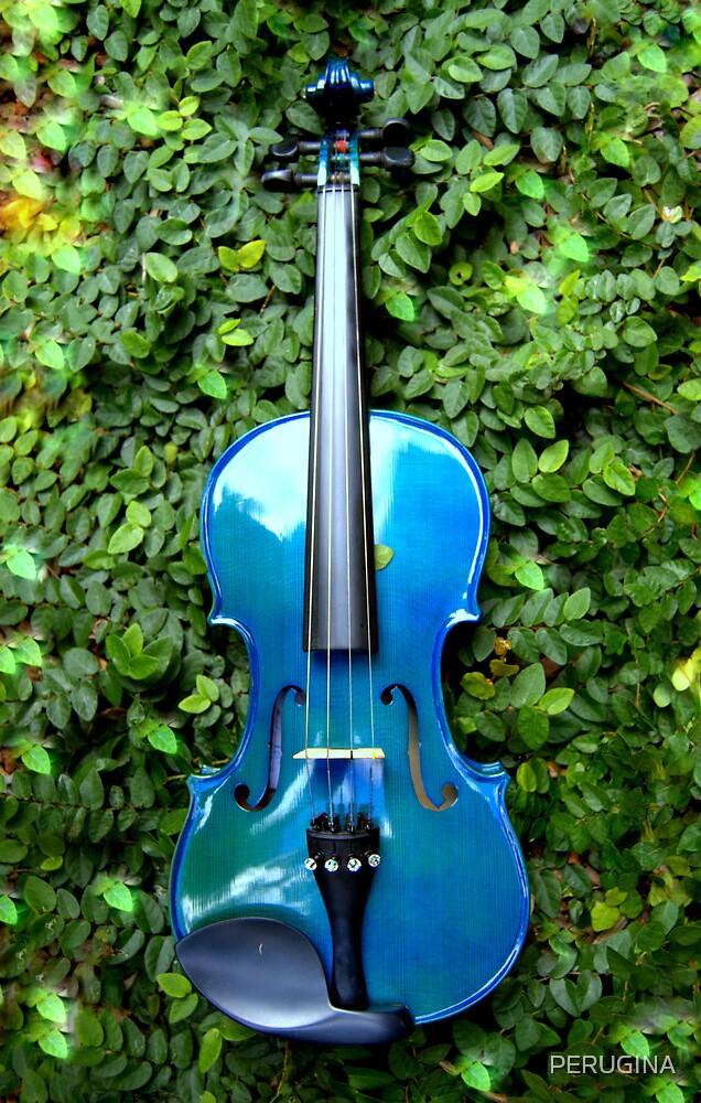il violino blu nell' edera © 2010 patricia vannucci  by PERUGINA
