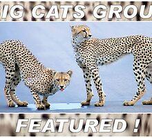BIG CATS AVATAR CHALLENGE by Magriet Meintjes