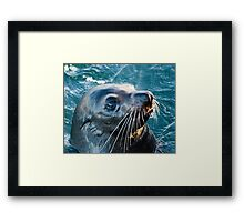 Australian Fur Seal Framed Print