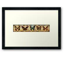 The Butterfly Collection #2 Framed Print