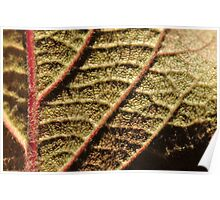Autumn Macro Under Lights Poster