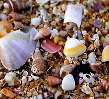 She Sells Sea Shells by Natalie Ord