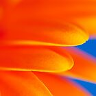 Orange Gerbera Abstract by Craig Joiner