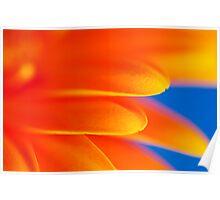 Orange Gerbera Abstract Poster