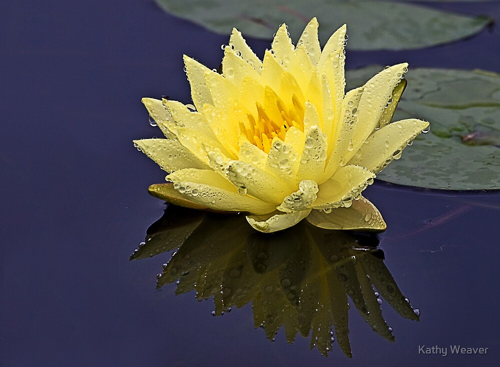 Lily In the Rain by Kathy Weaver