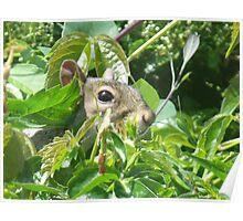 I'll hide you seek ! Poster