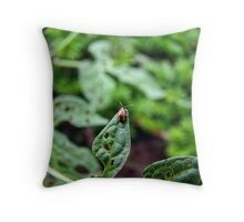 The Golden Tortoise Beetle Throw Pillow