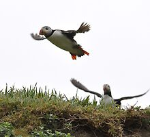 Puffin Fun by ApeArt