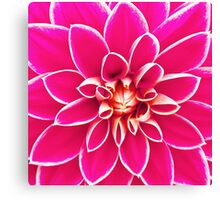 Bright girly pink white dahlia flower  Canvas Print