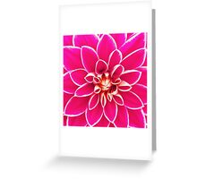Bright girly pink white dahlia flower  Greeting Card