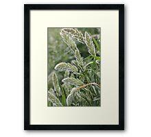 Wild flora XI 5404 Framed Print