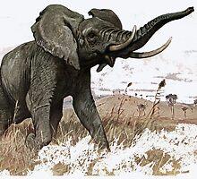 African bush elephant by marmur