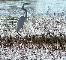 wetlands : Florida Everglades ..slow black death awaits  by Isa Rodriguez
