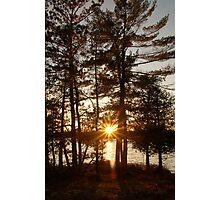 Sun Burst Pine Photographic Print