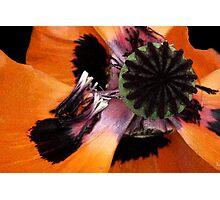 Poppy extravaganza Photographic Print