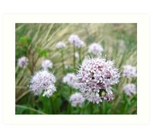 Rocky Mountain Wildflowers Art Print